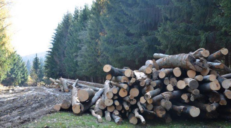 În România se taie 38,6 milioane de metri cubi de lemn, cu 20 de milioane peste cifrele oficiale