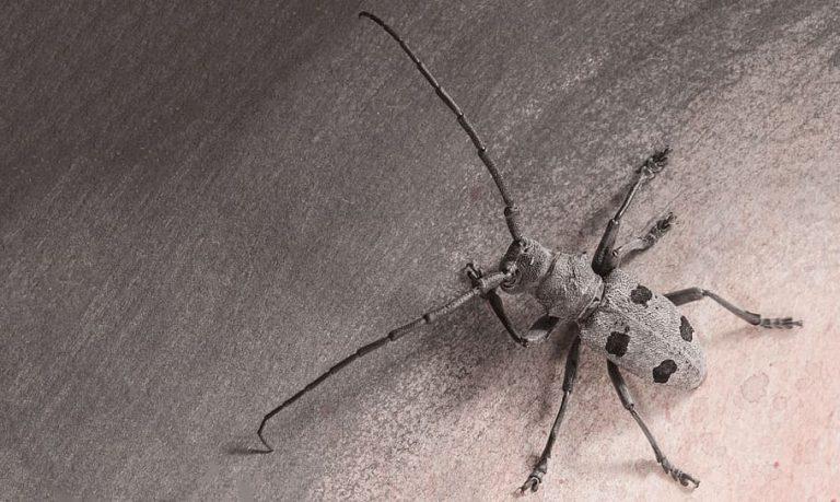 Comisia Europeană invocă protejarea unei specii de gândac pentru suspendarea finanțării autostrăzii Sibiu – Pitești